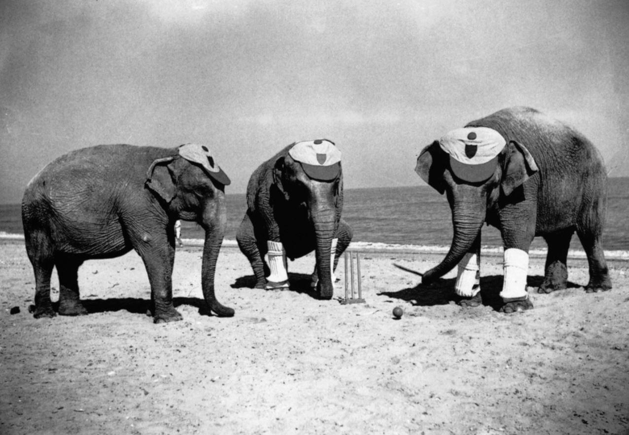 Игра крокет - Слоны- крокетисты